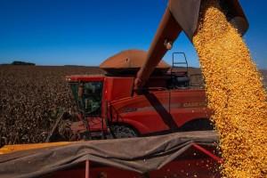 Brasil deve superar os Estados Unidos e se tornar maior exportador de grãos do mundo