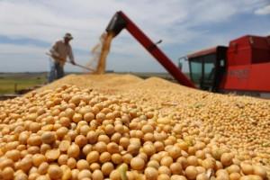 Safra brasileira de grãos é superior a 1 tonelada de alimentos por habitante