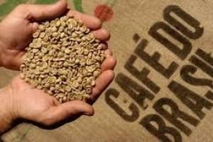 Brasil exporta volume recorde de 45,6 milhões de sacas...