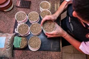 Cafeicultores do Cerrado Mineiro preparam-se para participar da etapa...
