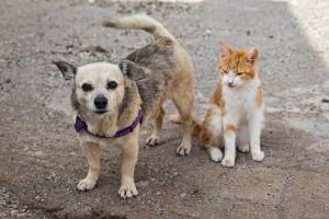 Sancionada lei que proíbe sacrifício de cães e gatos de rua por...